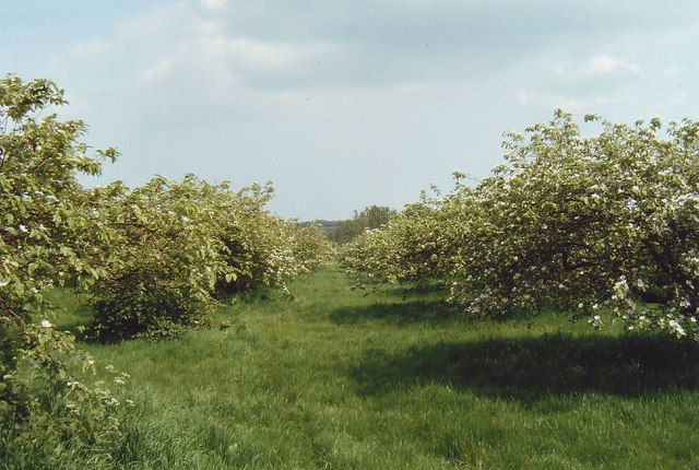 Orchard at Tiptree Jam factory