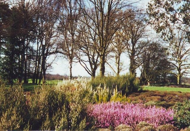 Heather garden at Wisley RHS