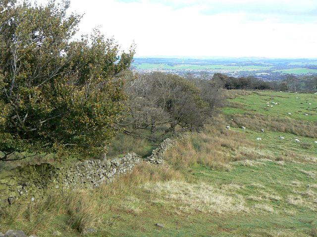 The edge of Burbage Edge Plantation
