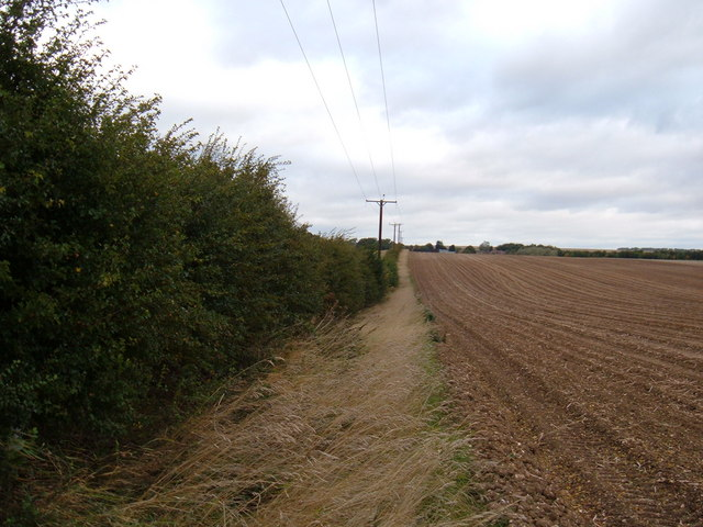 Hedgerow and Field