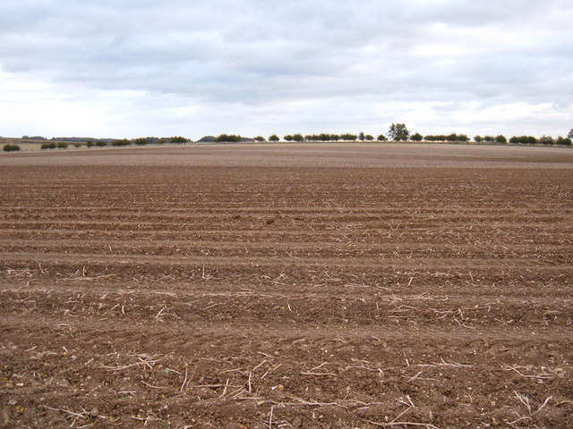 Wolds Farmland