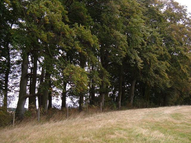Woodland near Dalton Gates Farm