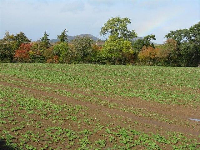 Field near Pinnacle
