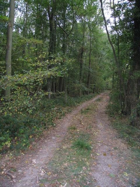 Track leading into Hodd's Copse.