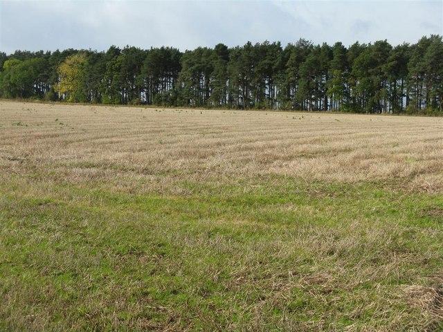 Stubble field near Ashieburn