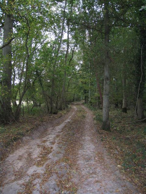 Dry track in Hodd's Copse
