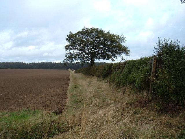 Bridleway to Kilnwick
