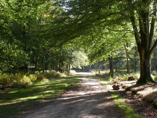 Aldridgehill Inclosure, road