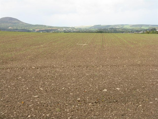 Winter barley field by the road to Maxton