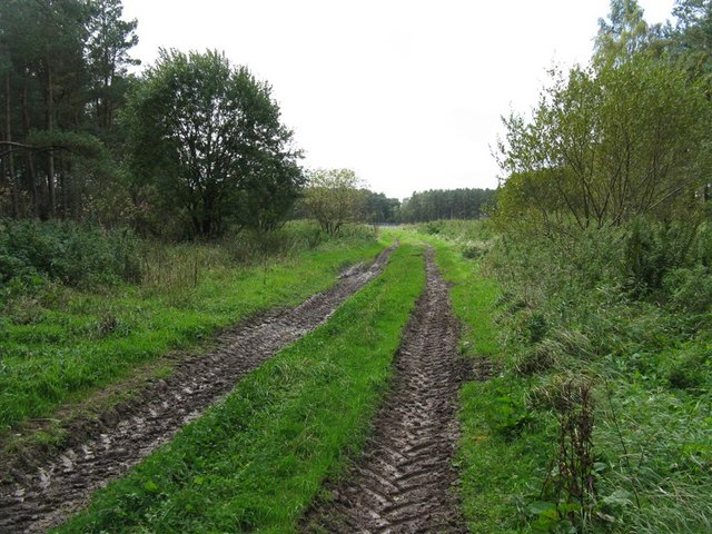 Muddy track by Newton Forest
