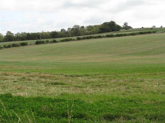 Stubble field on Ancrum Moor