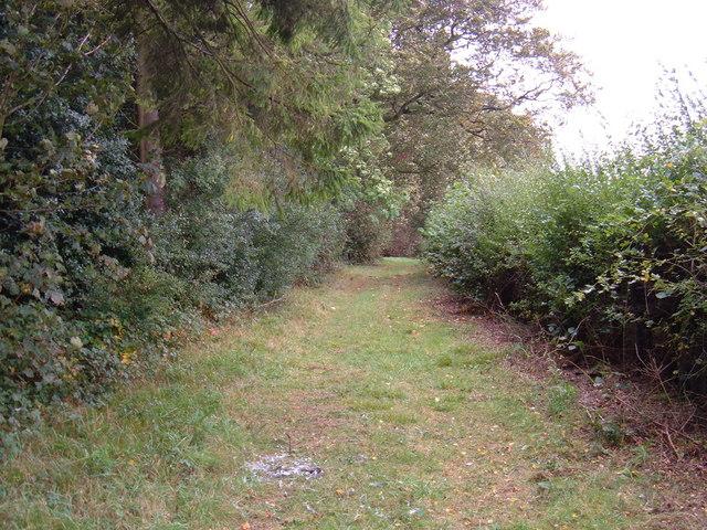 Track beside Dalton Wood
