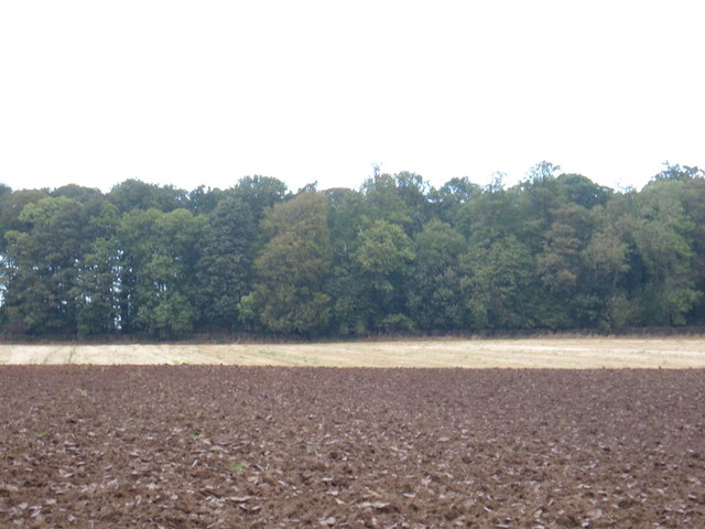 Lockington Wood