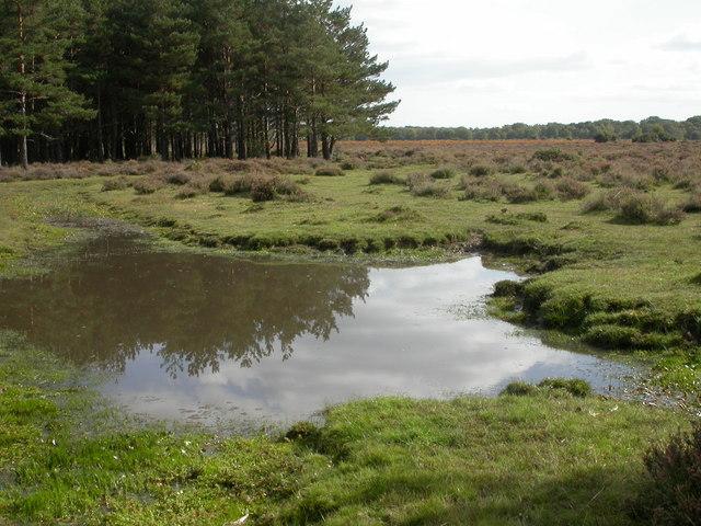 Ober Heath, pond