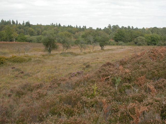 Crab Tree Bog, Silver Stream
