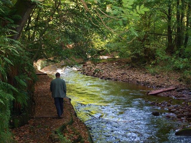 The path through Gelt Wood