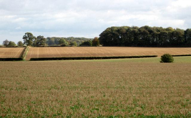 Fields towards East Ravendale