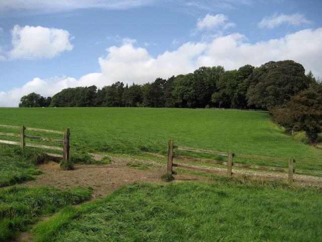 Dancliff Plantation