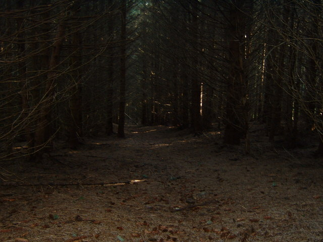 Dark forest with a few gleams of sunlight