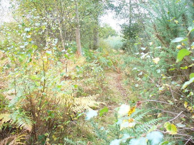 Bridleway Through Birchfield Copse