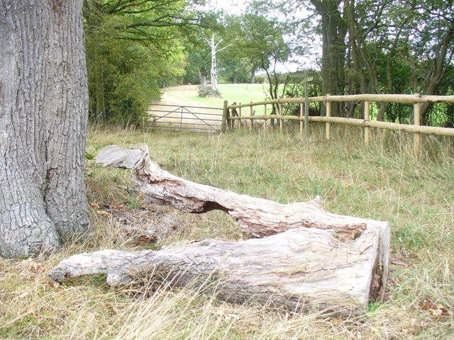 Near Haymans Farm