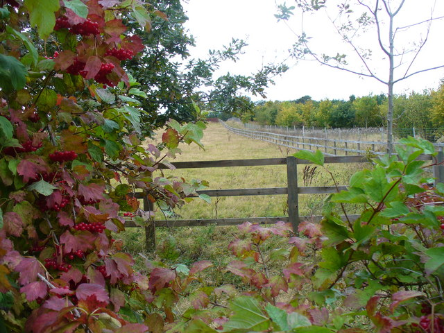 Footpath to Frith Wood