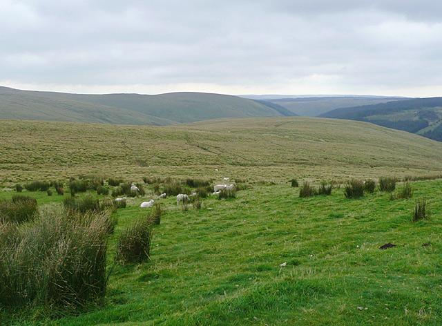 Rough grazing on Drum Nantygorlan, Powys