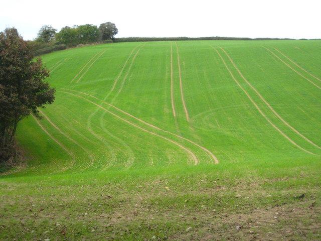 Fresh new growth near Nansough Barton