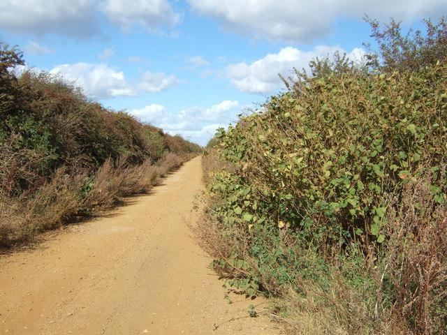 Between bushes and brambles