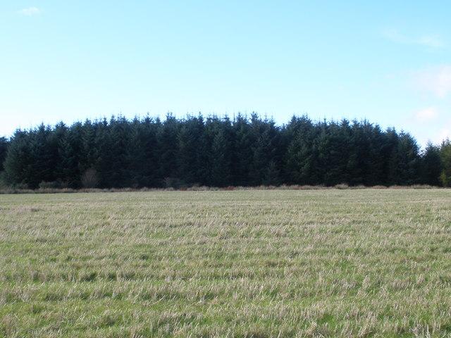 Forest near to Upper Ardroscadale