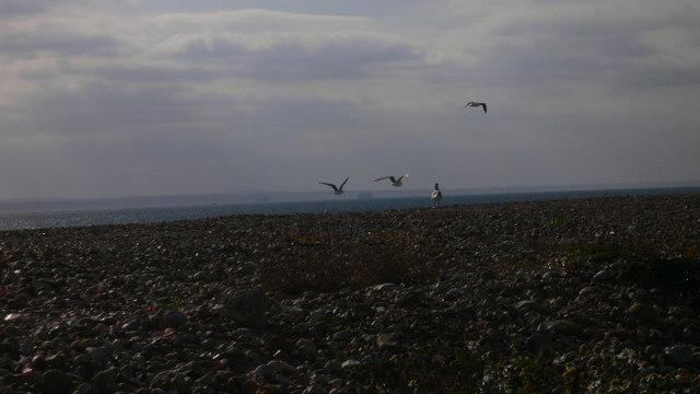 Seabirds above shingle on South Hayling