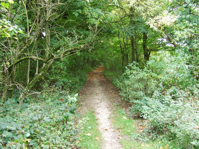 Bridleway towards Colesbourne