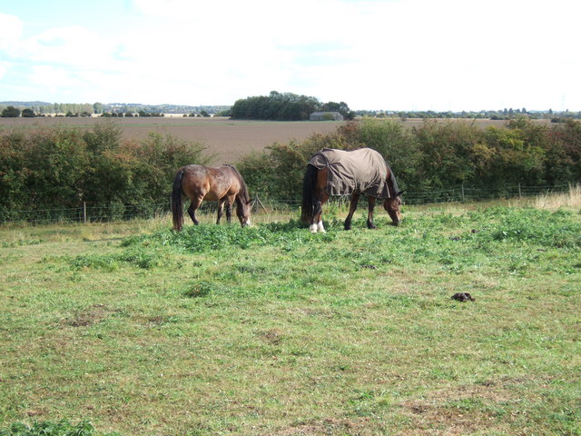 Horses on the east bank of The River  Great Ouse
