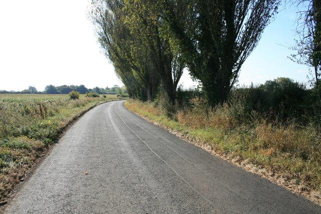 Poplars beside the road