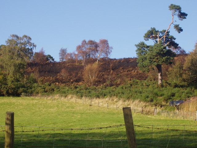 Fire damaged hillside
