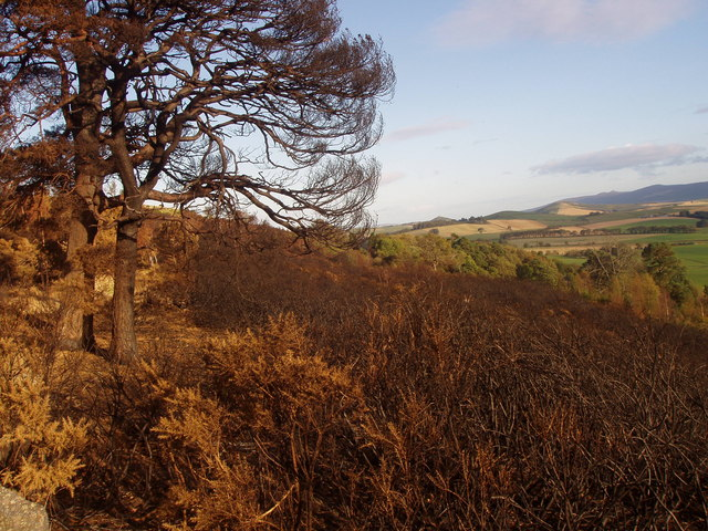 Fire damaged gorse and trees