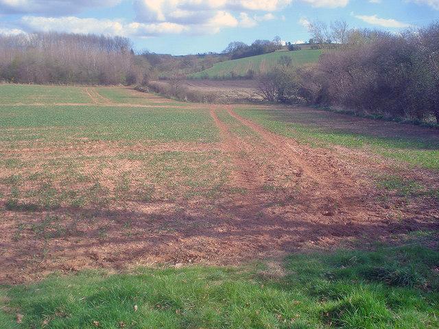 Fields near Marston Firs