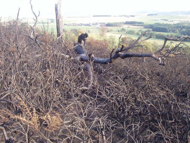 Burnt out tree