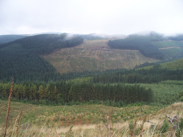 Myherin Forest - looking across to Pen Corbed
