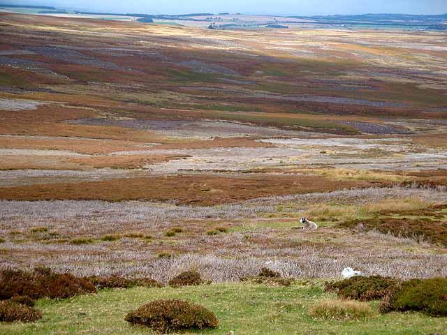 Moorland patchwork