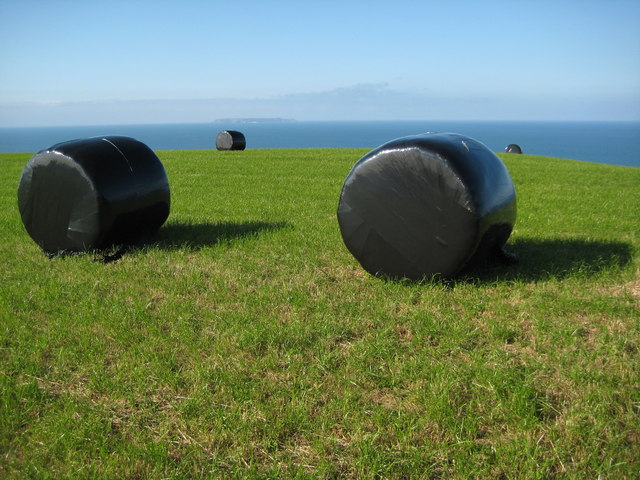 Silage bales above Fatacott Cliff