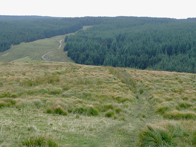 Moorland and Forest, Drum Nantygorlan, Powys