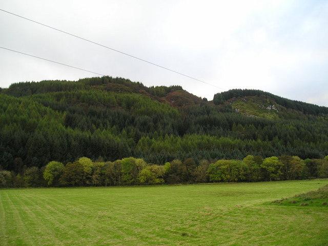 Forest plantation above Dalnacabaig