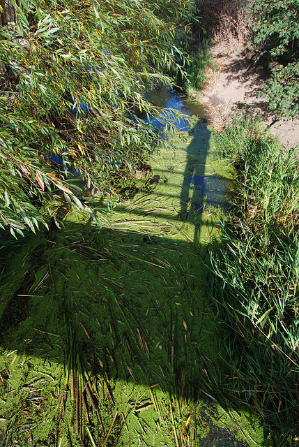 Shadows and weed on Rea Brook