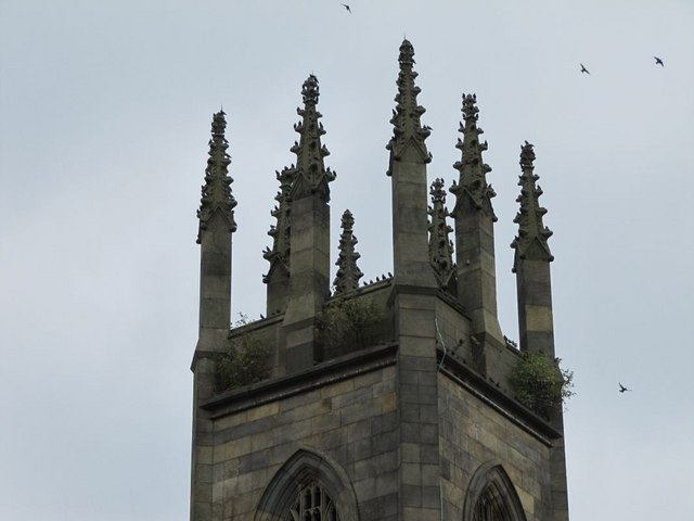 Shrubs on the tower