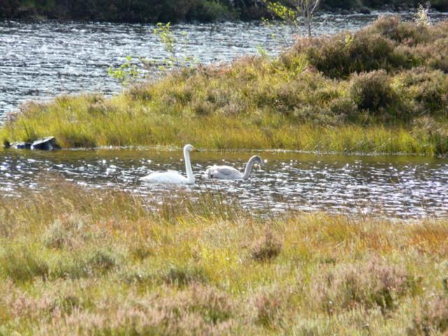 Swan family, Glen Strathfarrar.