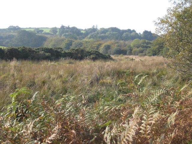 Rough marshy ground south of Westerlake Farm