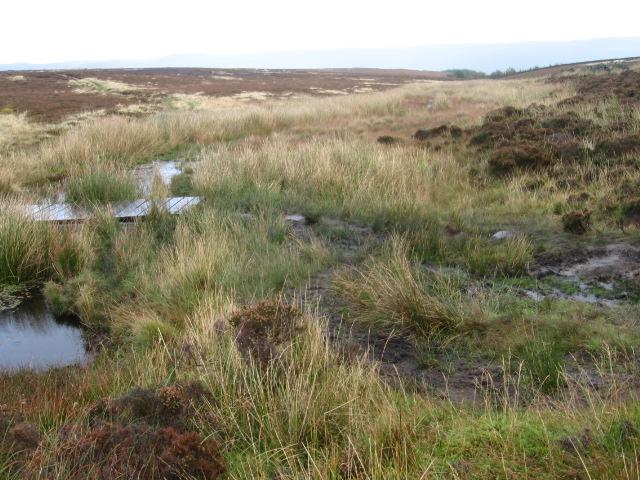 Siney Sitch on Offerton Moor