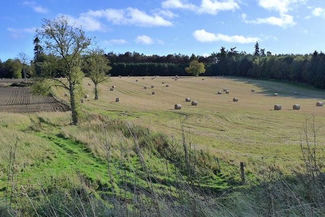 Ballathie fields