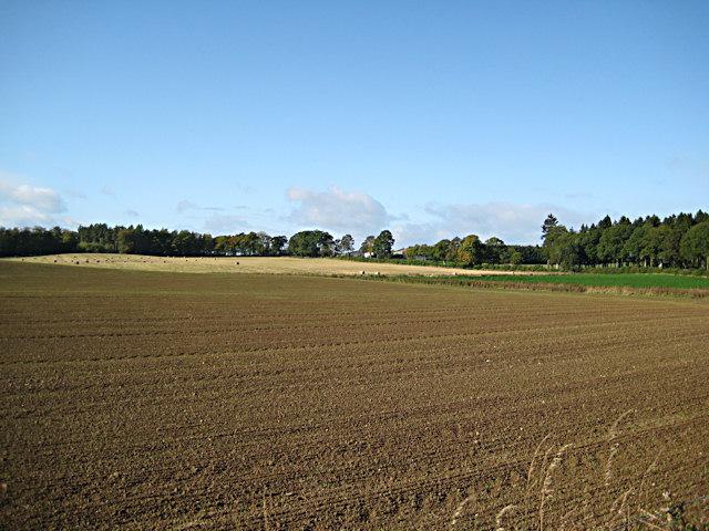 Recently sown field at Ballathie